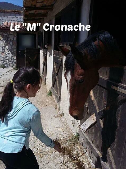 piacciono i cavalli