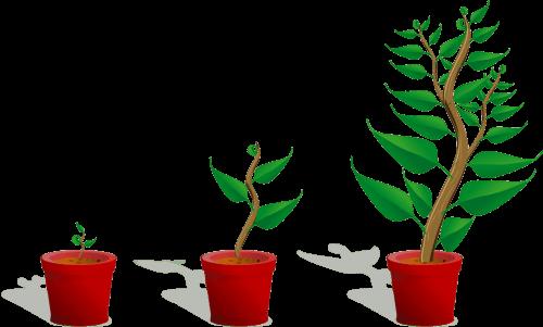 crescono